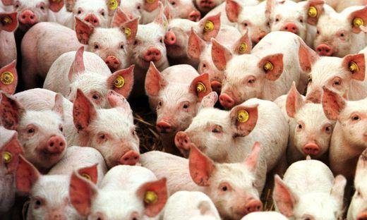 Themenbild: Antibiotika in der Nutztierhaltung