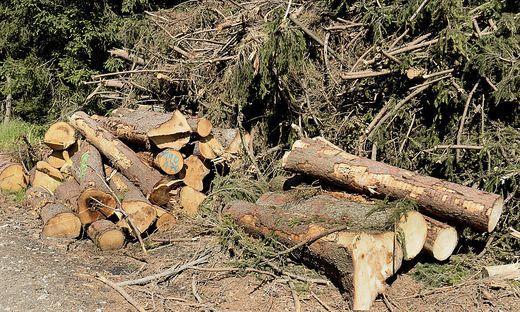 Bei Forstarbeiten wurde ein 42 Jahre alter Mann verletzt