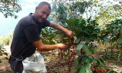 Steinwender bei der Kaffeeernte in Guatemala