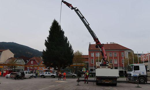 Der Brucker Christbaum kann bereits bewundert werden