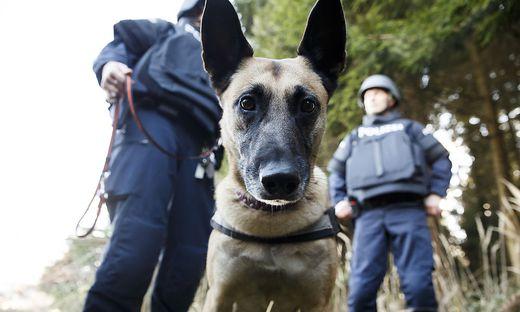 21 Polizeidiensthunde gibt es in Kärnten