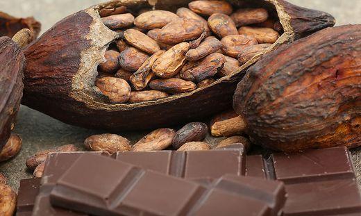 Die Kakao-Pflanze ist sehr anspruchsvoll