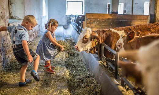 Warum Bauernhof-Kinder gesünder sind