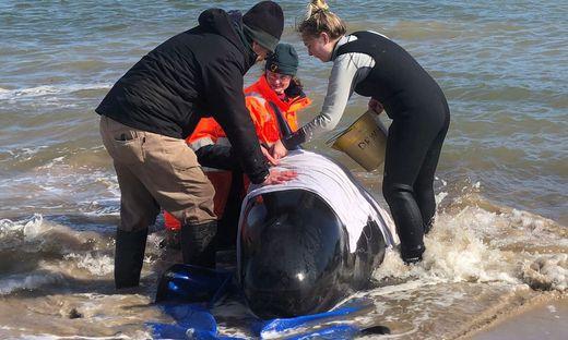 Dieser Grundwal konnte gerettet werden