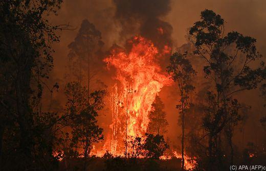Verheerende Buschfeuer: Australischer Bundesstaat rief Notstand aus