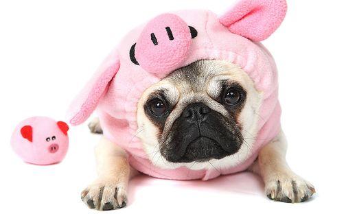 Wie wir unseren inneren Schweinehund austricksen können