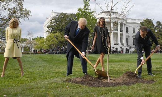FILES-US-FRANCE-DIPLOMACY-TREE