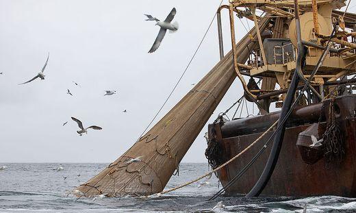 Greenpeace warnt vor MSC-Fisch am Karfreitag
