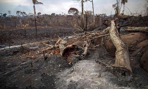 Durch die Rodungen wird ein wichtiger Kohlendioxidspeicher zerstört – und die Klimakrise befeuert