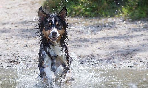 Wie der Sommer für ihren Hund angenehm wird