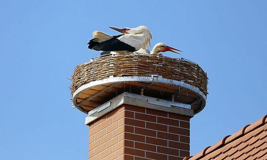 Das Pärchen hat das neu renovierte Nest in Fürstenfeld bereits besiedelt