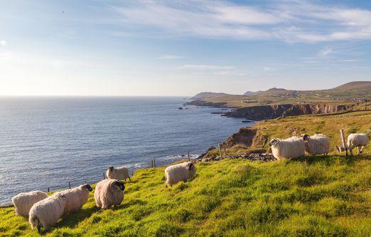 Koste das Wasser des Lebens im grünen Irland.
