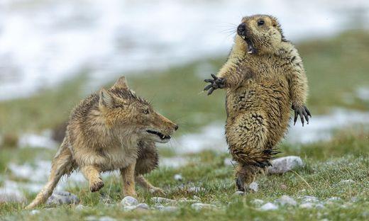 Wildlife Photo of the Year: Beste Tierfotos des Jahres gekürt