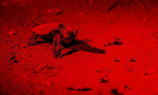 Schildkröten Jesolo
