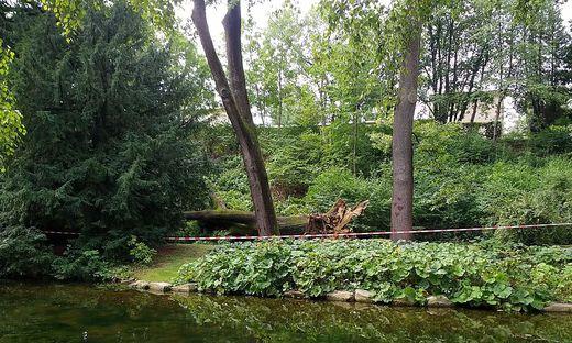 Stadtpark gefallener Baum