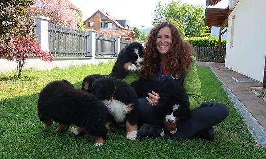 Christina Fruhwirth und ihre Berner Sennenhunde