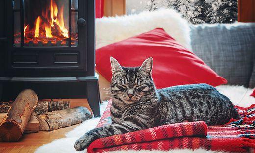 Sujetbild Katze vor Kamin