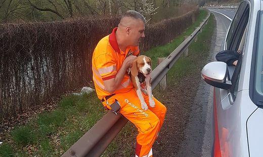 Der Hund war auf der Autobahn unterwegs