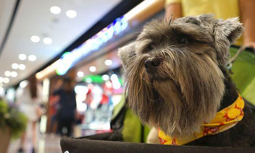 Hunde sind im Einkaufszentrum nicht immer gerne gesehen