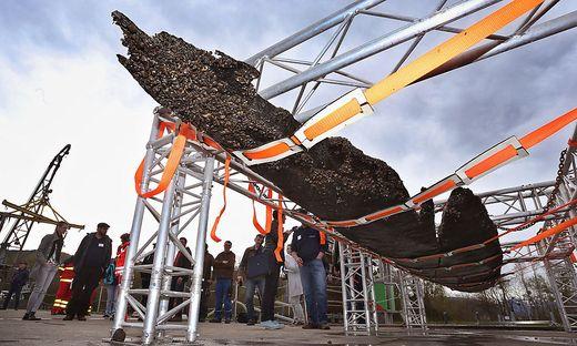 Mehr als 3.000 Jahre altes Boot aus dem Bodensee geborgen