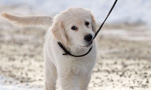 Sujetfoto Hund.