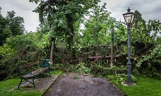 Entwurzelte Bäume im Grazer Stadtpark