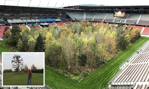 Baumschulen-Chef Wolfgang Praskac (kleines Bild) hat genug Platz für die Bäume aus Klagenfurt reserviert