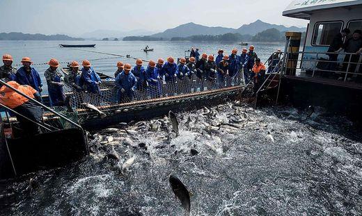 CHINA-ECONOMY-FISH