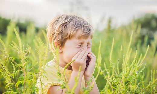 Der hohe Ambrosia-Pollenflug sorgt auch bei Kindern für allergische Reaktionen