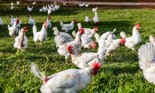 Die Tierretter von Gut Aiderbichl waren erschüttert, wie schlecht der Zustand einiger Biohühner war