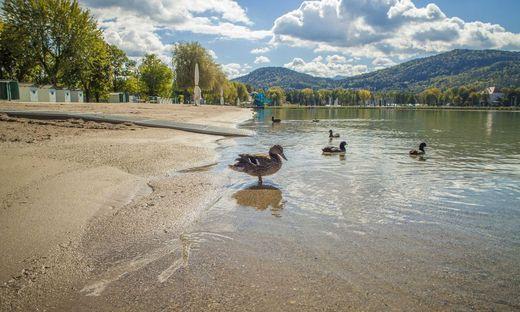 Strandbad Klagenfurt, Enten, See, Woerthersee