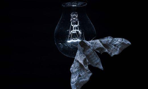 Nachtfalter auf einer Glühlampe