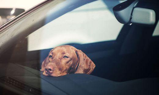 Hund; Auto; Hitze