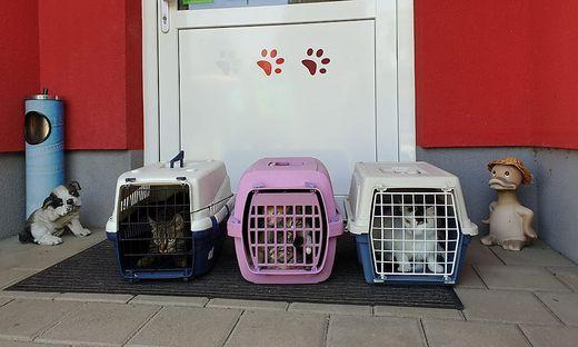 13 Katzen befanden sich in den Transportkörben, die vor dem Tierschutzhaus abgestellt wurden