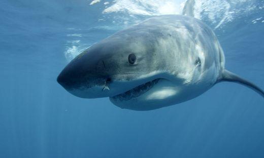 Vor Augen der Eltern: 21-Jährige von drei Haien angegriffen: tot
