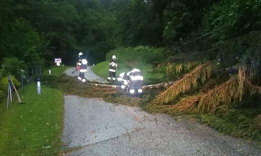 Die Feuerwehren im Bezirk mussten durch das Unwetter zahlreiche Straßen von umgestrüzten Bäumen befreien