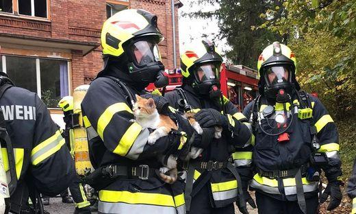 Die Feuerwehrleute mit den geretteten Katzerln