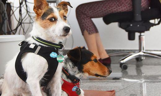 """""""Kollege Hund"""" reduziert Stresslevel im Buero"""