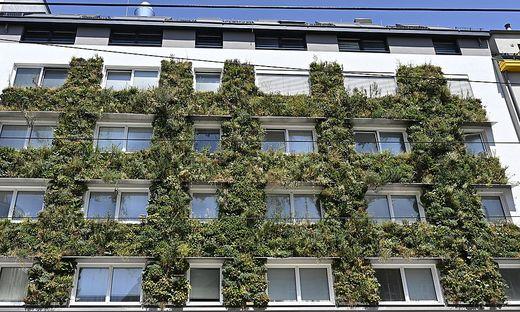Fassadenbegrünung an einem Wohnhaus in Wien-Ottakring
