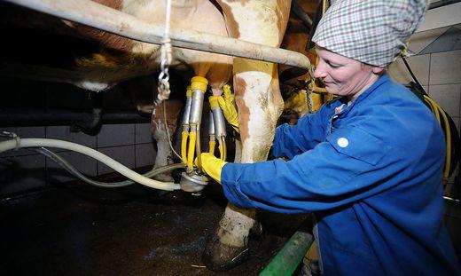 Bauern fordern höheren Preis für Milch