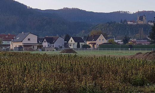 Hanfanlage in Judendorf sorgt für Kritik bei Anrainern