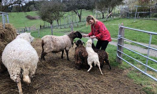 Andrea Pirker hält 20 Schafe, fünf hat der Wolf gerissen