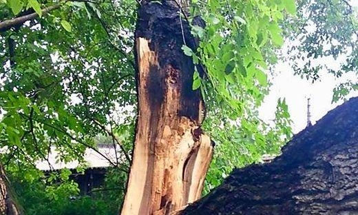 Der Baum wurde durch den Sturm beschädigt