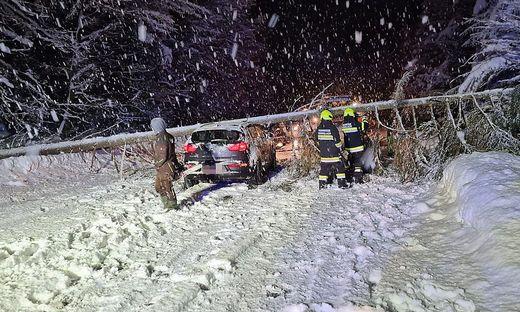 Zwischen Drobollach und Villach wurde das Fahrzeug von diesem Baum getroffen