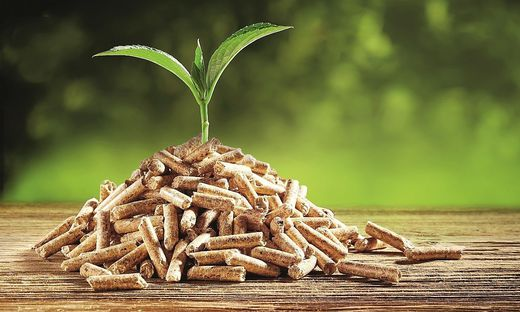 Seedling sprouting from a pile of wood pellets