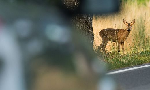 Alle zwei Stunden passiert in Kärnten ein Wildunfall (Symbolfoto)