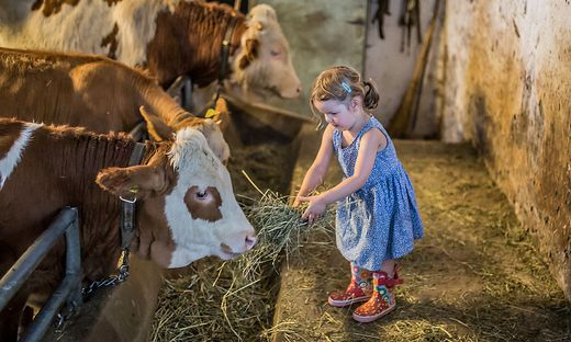 Schon die Kleinsten werden im Rahmen verschiedenster Initiativen mit der Landwirtschaft vertraut gemacht (Symbolbild)