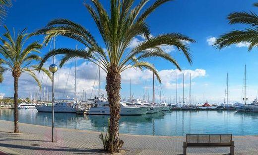 Mallorca: Palme erschlägt Frau während Sturm