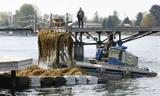 Mähboote auf Alter Donau in Wien wieder im Einsatz