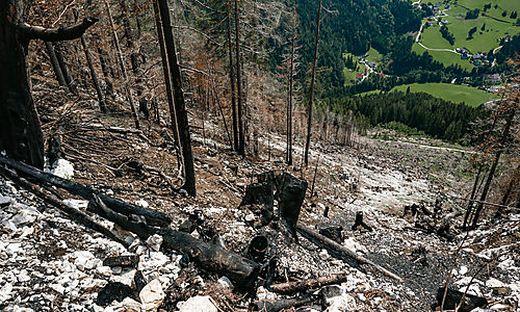 Vier Tage lang wütete im Juni der Waldbrand in der Gemeinde Zell-Freibach